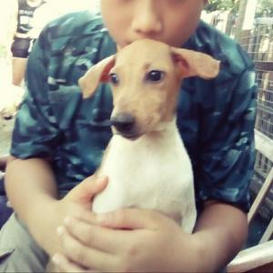 Penang Animal Welfare Society 保護犬たちの聖域。
