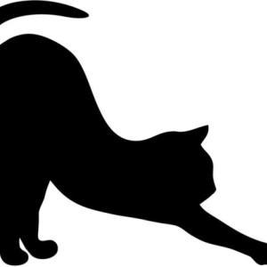 18日間連続で10kmラン&ウォーク~猫の背伸びと筋膜リリースで楽に走る