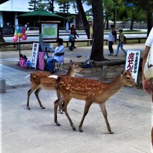 ♪ 奈良の春日野 青芝に ♪