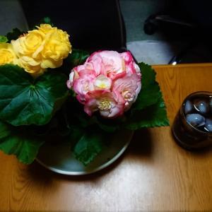 花の名前を聞くの忘れていた オロオロ(゚ロ゚;))((;゚ロ゚)オロオロ