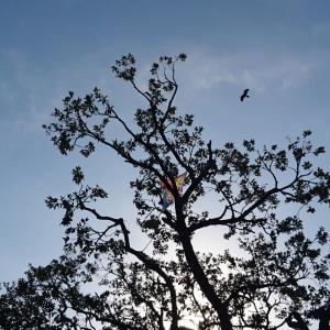空を飛ぶ鳥と木に絡まった凧