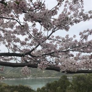 かけ足桜めぐり
