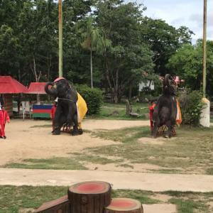 タイの動物園、象ゾーンと園内施設 編