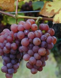 ブドウ畑の価格はおいくら万円??ブルゴーニュのバブリーな畑の価格。知ると面白いワインの裏側。