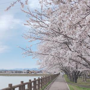 それでも桜は咲き誇る