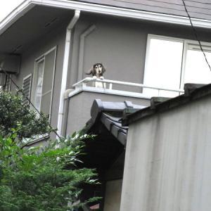 ◆屋根が壊れています!
