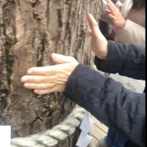 神社の御神木のオーラを感じるコツは気のせいだと思わず信じる。