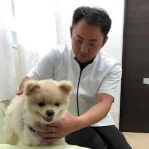 人と動物を癒すレイキ伝授。対面・(zoom)