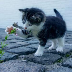 野良猫に餌をあげるのをやめました