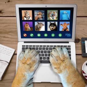 オンライン内見をやりました 使ったアプリは?