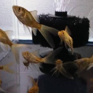 鉄魚水槽追加❗❗❗