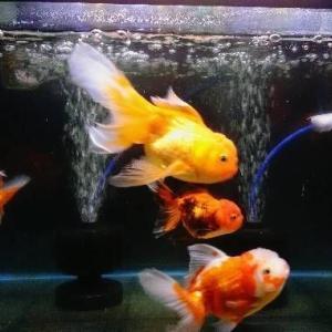 リビング水槽の魚達✨✨✨