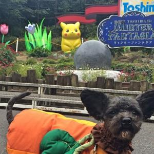 愛犬同伴でとしまえん〜2020年8月31日閉園の遊園地を愛犬同伴で楽しむ