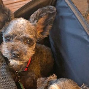 ル・マグレブ〜テラス席なら愛犬同伴可能な、東京都世田谷区二子玉川駅そばのモロッコ料理店