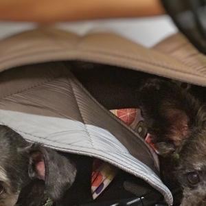 龍海飯店本店〜屋内愛犬同伴可能な横浜中華街のオーダーバイキングが可能な中華料理店