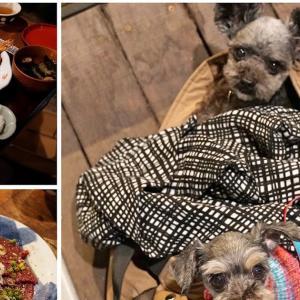 菊松食堂〜テラス席なら愛犬同伴可能な東京都立川市の居酒屋