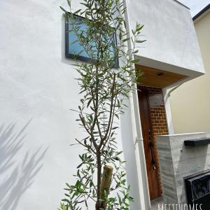 奥沢の家、シンボルツリー入りました!
