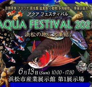 明日はアクアフェスティバル!!!