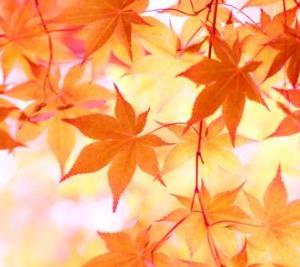 10月の休診日のお知らせ(浦安市のくりた整骨院です)