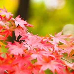 11月の休診日のお知らせ(浦安くりた整骨院・整体院)