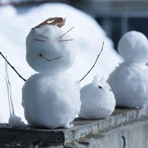 【防寒対策】ミニマリストが冬に備えて購入した物を紹介します!