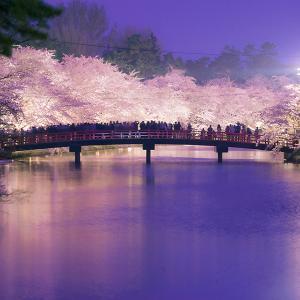 弘前桜祭りまでのカウントダウン3