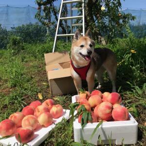 桃の木!(^^)!
