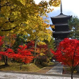 京都観光シーズンの混雑を避ける交通手段[2019年度]