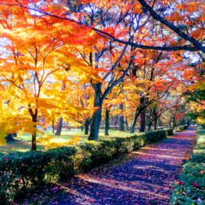 2019京都御苑秋の見どころ