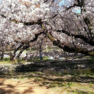 未婚女性は京都市のどのエリアに多いか?(国勢調査で見るエリア別人口割合)