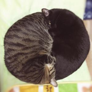 猫団子いろいろ