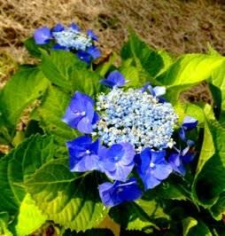 こんな花もありましたよ。