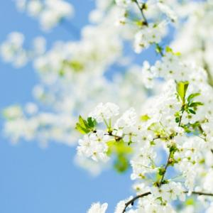 花粉症は自然治癒力現象なのです?!