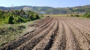 ブロッコリー栽培、畑の今2019年11月16日