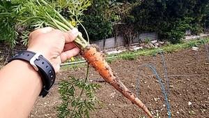最近のハートレインボー【2021年2月27日】今日は旧の16日ですね!福祉×農業×食育-グルメ紹介!