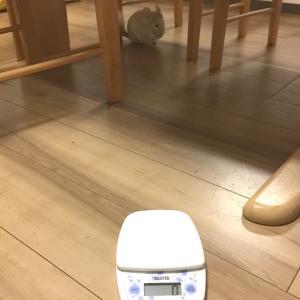 【ミン君】体重測定が難しいッ!