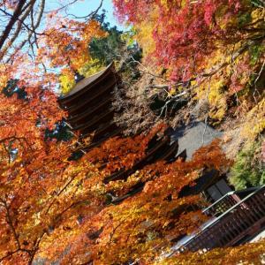 【重要文化財】十三重塔と紅葉