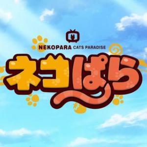 【冬アニメ感想】ネコぱら 7話