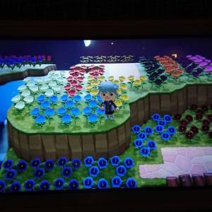 あつ森 紫のアネモネ・青いバラの交配に成功した手順