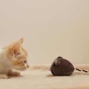ネズミが家に出た!ネズミの駆除を業者に頼まず自力でやってみた