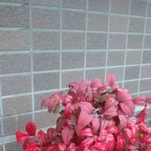FW: 春の雨に濡れた赤色