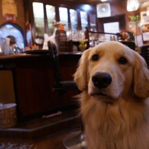 十三の純喫茶『ワンアップ』の看板犬に癒された話|ゴールデンレトリバーのニコちゃんがお出迎え!