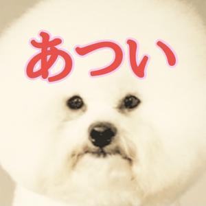 8月24日(火) hitaruで歌います!