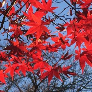 有終の美とは紅葉に問う
