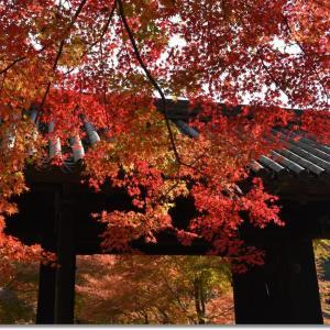 秋月城跡 黒門と紅葉の輝き
