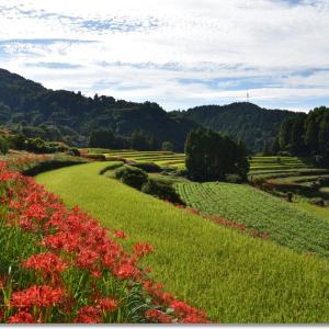 江里山の棚田と赤い彼岸花