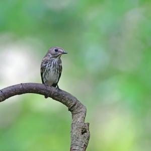 カラカラ浴場の野鳥たち