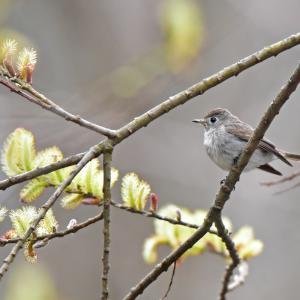 探鳥の楽しさ@「軽井沢・野鳥の森」