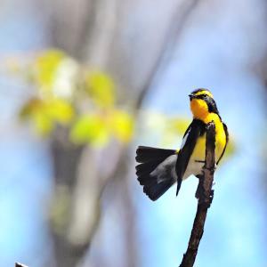 野鳥の楽園に出かけよう♪(2)