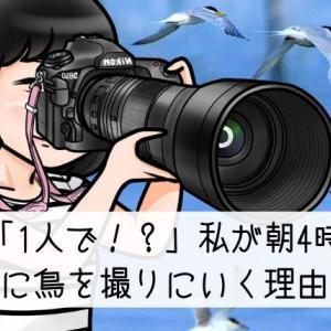 「1人で!?」私が朝4時に鳥を撮りに行く理由。